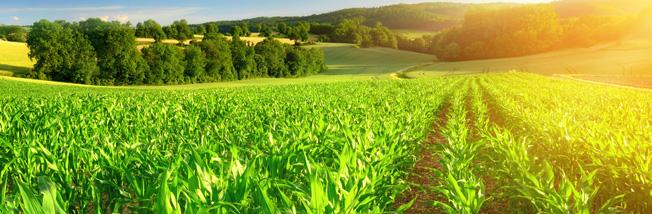 Kimleigh SA Agriculture Products